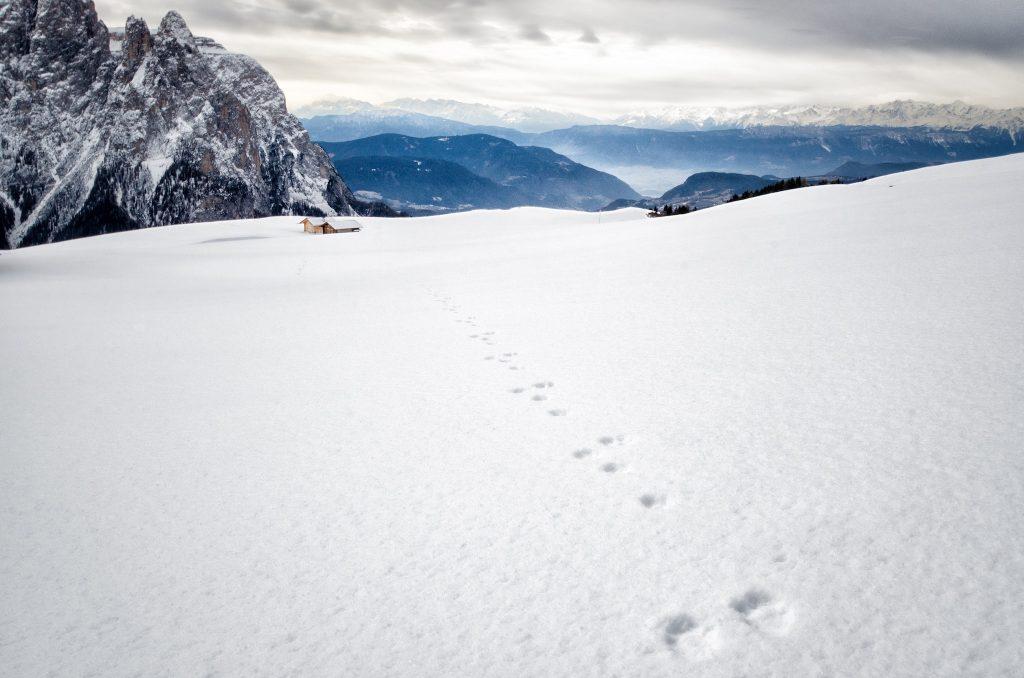 Neve Fresca sull'Alpe di Siusi - Foto di Giulia Cimarosti