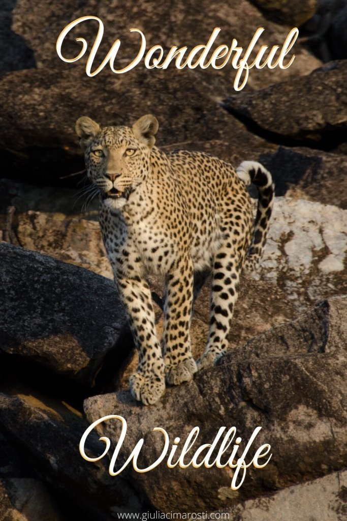 Fotografia degli Animali in Safari