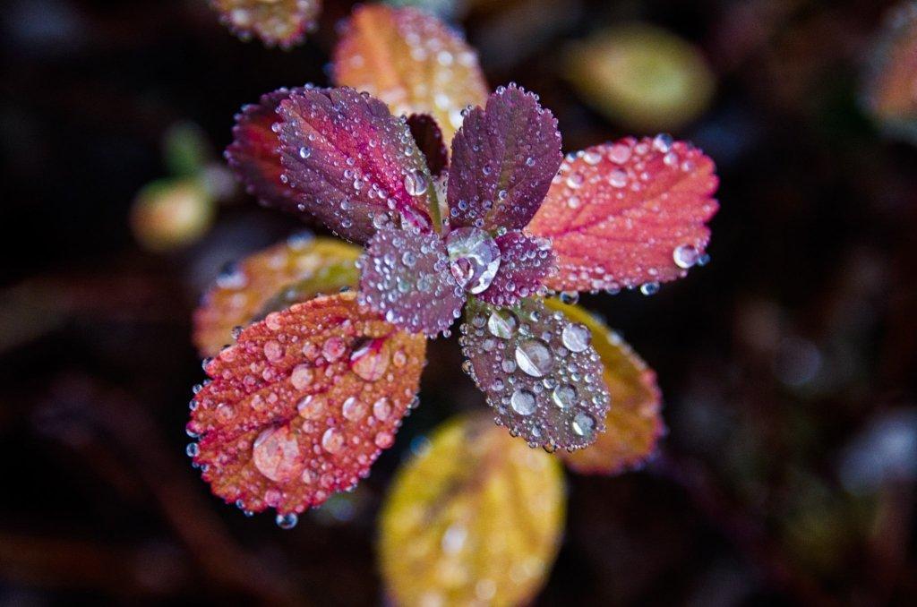 Gocce di pioggia, Rugiada, Islanda