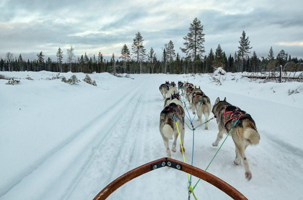 Slitta coi cani in Lapponia Svedese