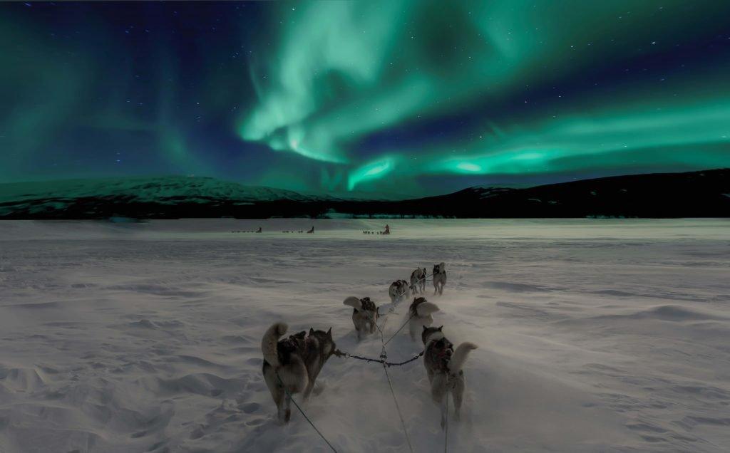 Viaggio alle Svalbard: Slitta coi Cani sotto l'Aurora