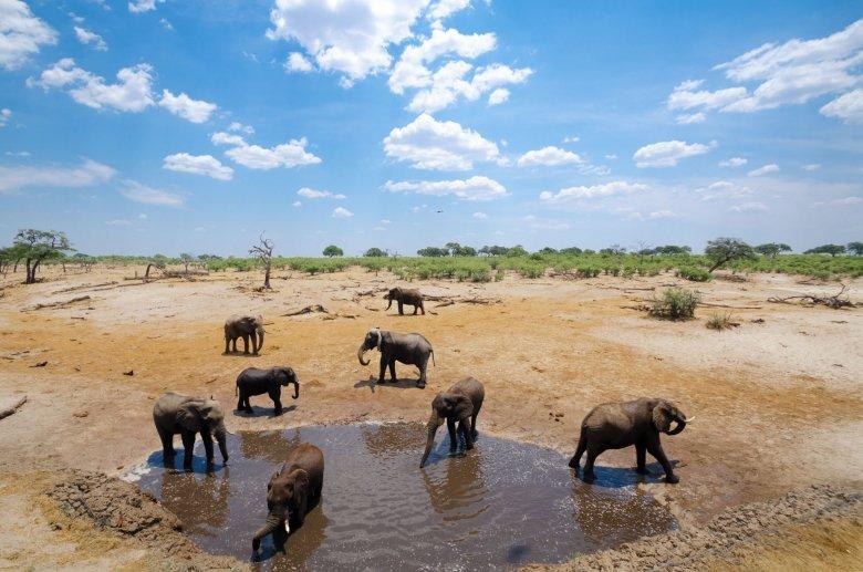 Branco di elefanti nel Chobe, Botswana