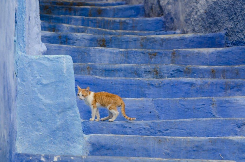 Chefchaouen, Marocco: La Città Blu - Gatto